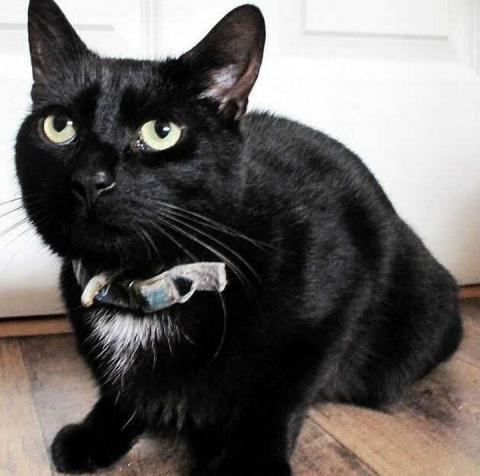 Домашний кот спас хозяйку, в…