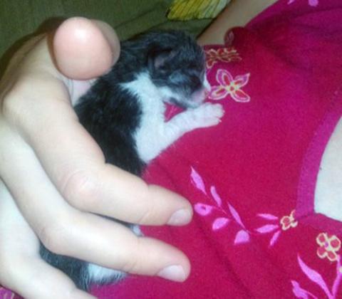 """Два года назад в траве нашла маленького """"мышонка"""""""