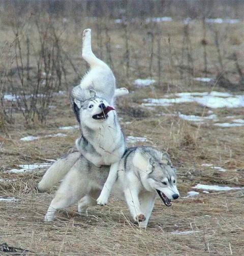 Собачьи неудачи: и смешно и …