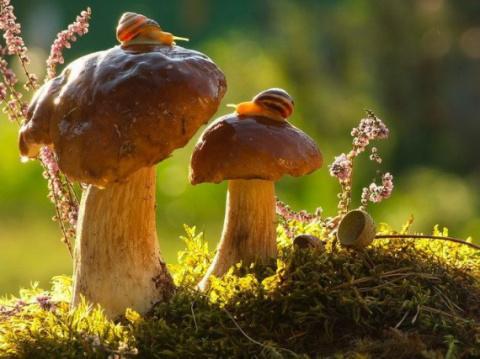 Сказочные макро-фотографии живой природы