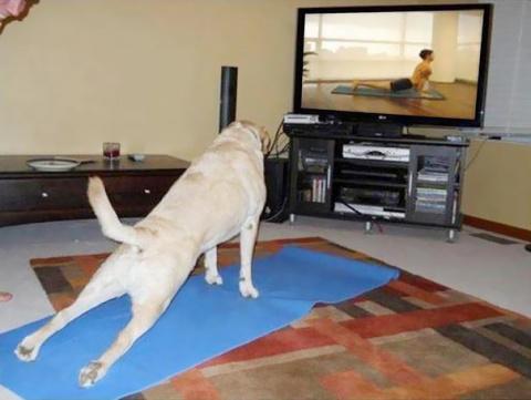 Начни день с йоги вместе с питомцем!