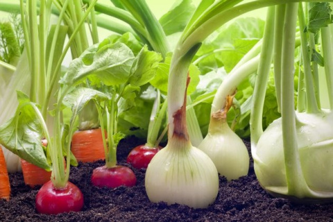 Смешанные посевы: взаимопомощь растений