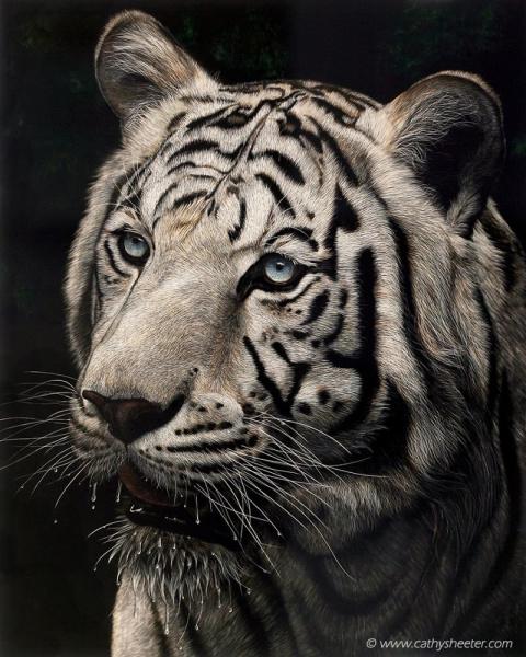 Гиперреалистичные рисунки животных в технике скретчборд: это потрясающе!