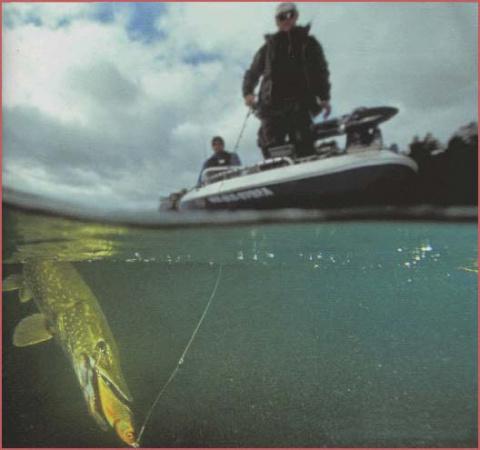 №938. Цвет приманки или что видит рыба в воде.