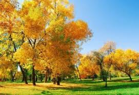 Осень. О чём молчат деревья