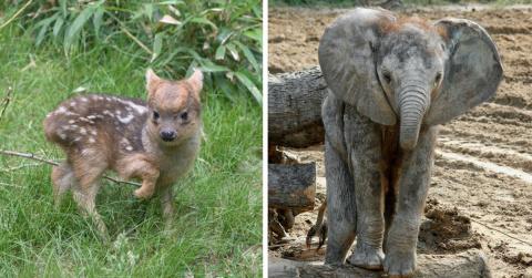 Зоопарки объявили конкурс на…