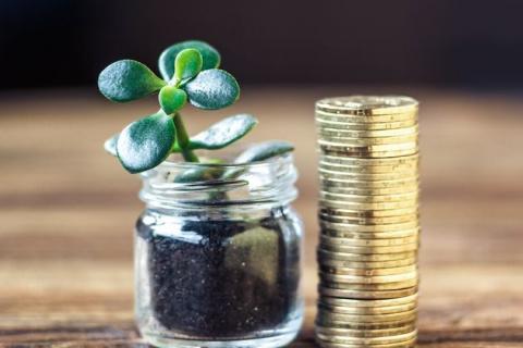 Топ 10: комнатные растения для богатства