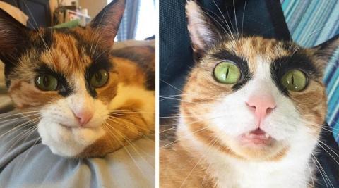 Знакомьтесь, бровастая кошка…