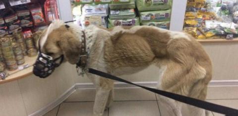 Сотрудники пермского склада приковали собаку к батарее и оставили умирать от голода