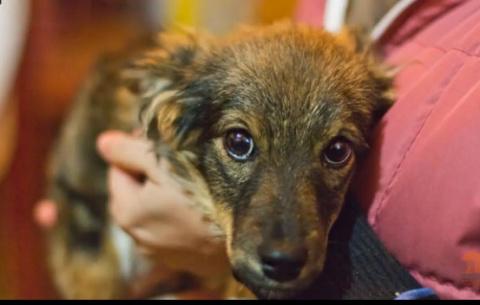 Воронеж. Многострадальный щенок Муха ищет заботливых родителей