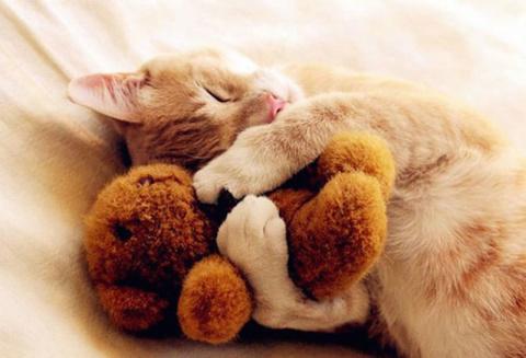 Все дети любят спать с игрушками
