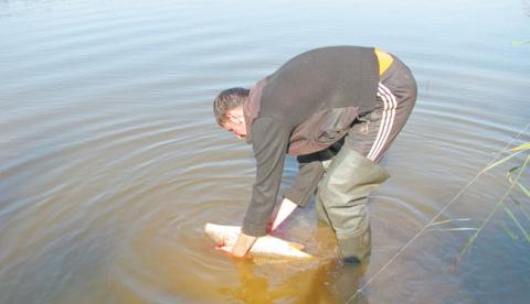 Что делать с пойманной рыбой?