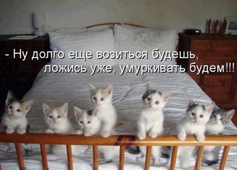 Прикольные и смешные зверюшки))