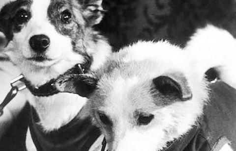 Лайка: трагедия первой собак…