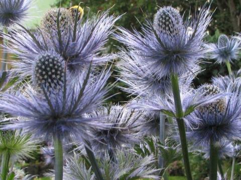 16 растений, защищающих от н…