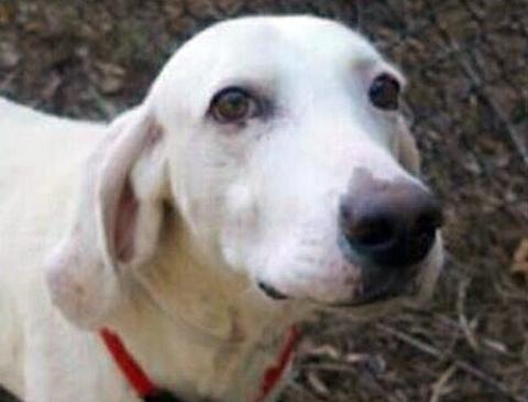 Эта собака 11 раз возвращалась в приют, пока его работники наконец-то поняли причину