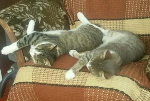 Фотографии с кошками для настоящих перфекционистов