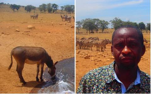 Спасение животных от засухи:…
