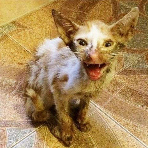 Ветеринар хотел усыпить его, но любовь и забота в который раз сотворили чудо!