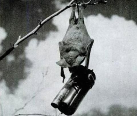 Боевые летучие мыши: как во …