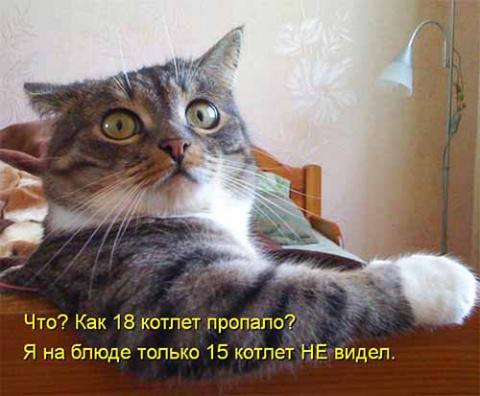 Кулинарный юмор в котоматрицах 27