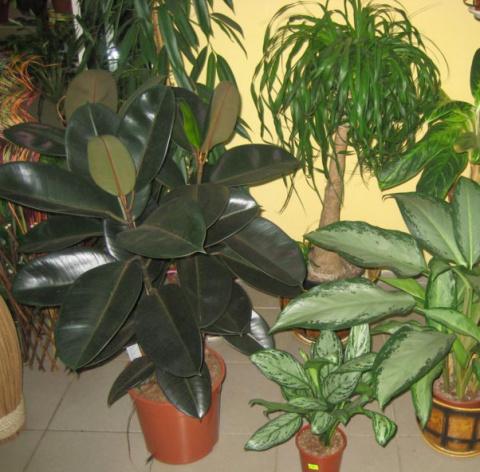В августе не забудем о комнатных растениях. 8 убийственных ароматов против комаров