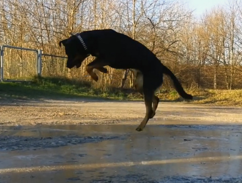 Увидев замерзшую лужу, этот пес начал вытворять нечто невообразимое!