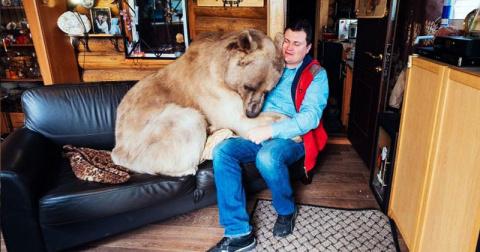 Этот медведь ведет себя как …
