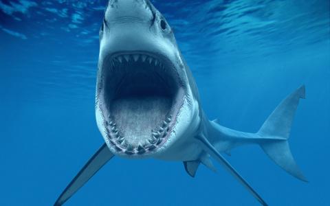 От кого страдают акулы?