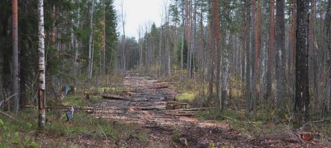 В Карелии общественники хотят сделать Сунский бор памятником природы