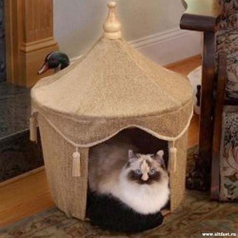 О влиянии котов на омоложение организма