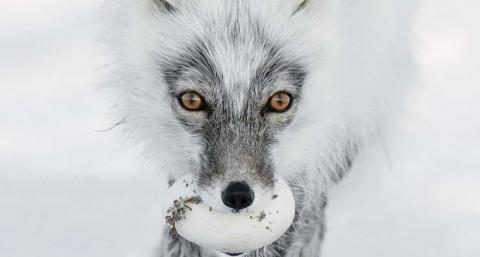 Музей естествознания в Лондоне назвал финалистов фотоконкурса дикой природы 2017