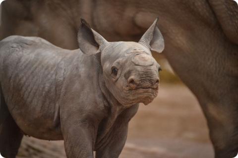 В зоопарке Честера родилось …