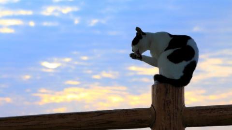 Почему кошки живут сами по себе, а не в стае?