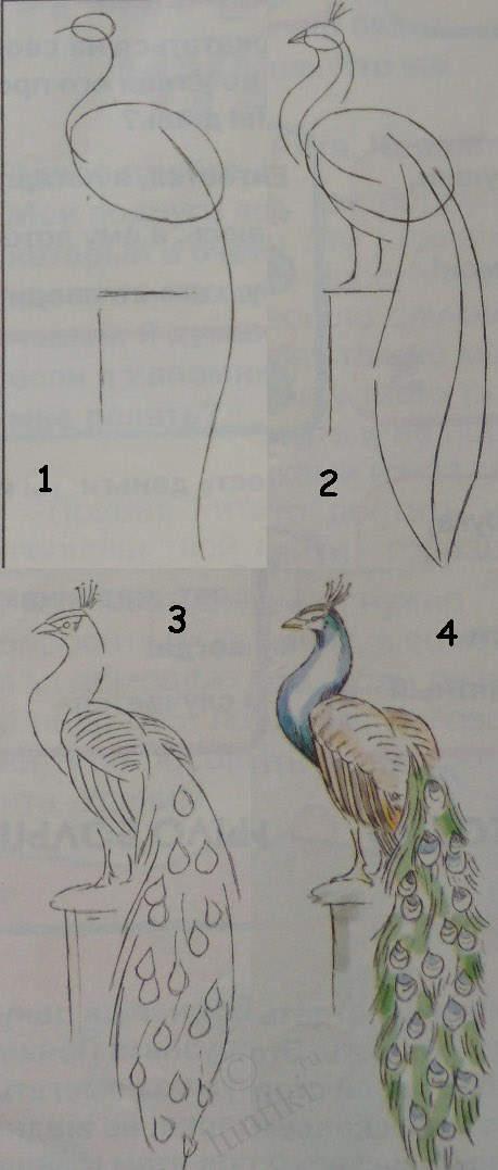 Рисуем павлина