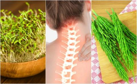 7 лечебных растений, которые…