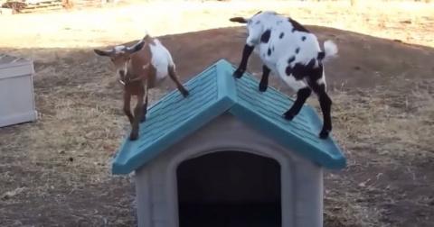 Эти милые крохи прыгают и ре…