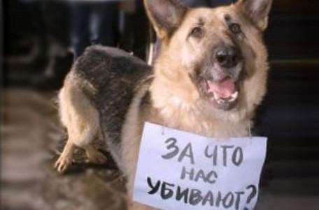 За жестокое обращение с животными садистов хотят наказывать с 14 лет
