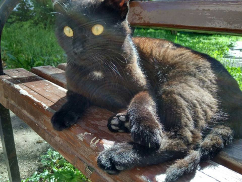 Раненый молодой котик. Срочн…