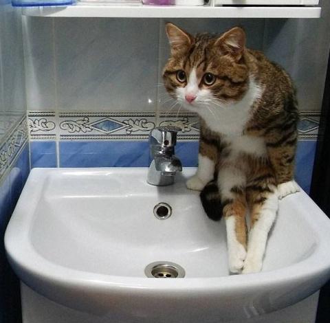 Эти коты - уже почти люди