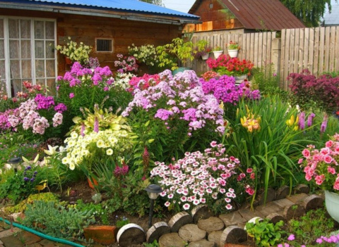 Клумба для ленивых! Выращиваем шампиньоны дома: правила и советы