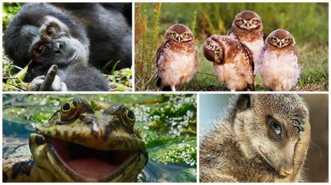 40 финалистов конкурса Comedy Wildlife Photography Awards 2016