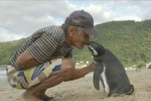 Пингвин каждый год проплывает 8000 километров, чтоб увидеть своего спасателя