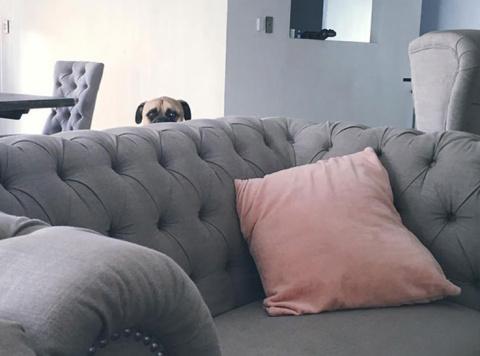 Эта собака постоянно шпионит за своим хозяином, где бы тот ни находился