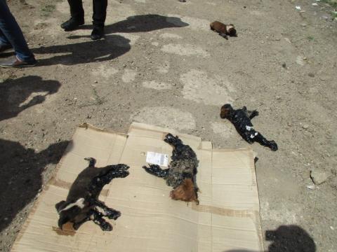 Щенков облили гудроном и оставили умирать на улице