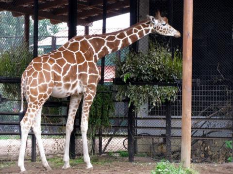 В Ленинградском зоопарке