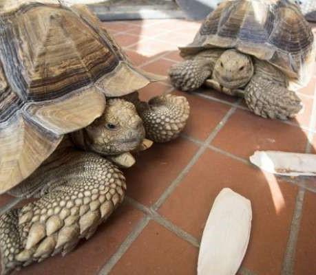 Мужик построил дом для своих черепах