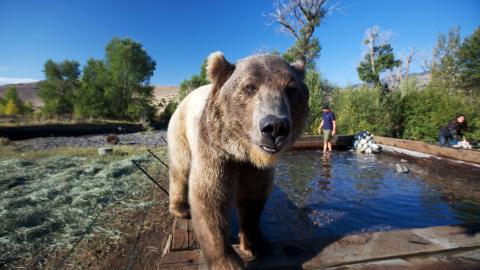 Брут — история дружбы человека и медведя