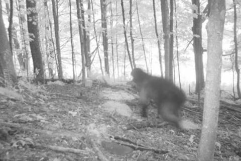 9 действительно необъяснимых фотографий из глубин леса