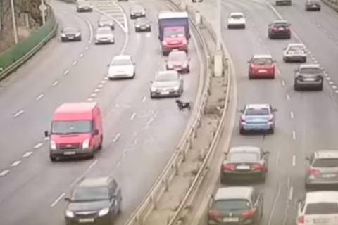 Выскочивший на трассу муфлон спровоцировал массовую аварию в столице Чехии